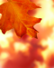 Autumn.png